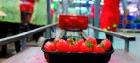Granada La Palma comienza a vender una nueva variedad de tomate
