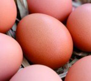 Huevos: En espera de tiempos mejores
