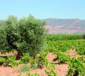 Nueva propuesta de almacenamiento privado de aceite de oliva