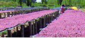 Agroserc amplía su capacidad de transformación de fruta en Argentina