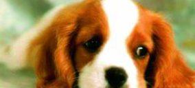 Petfood: Se estrechan los márgenes