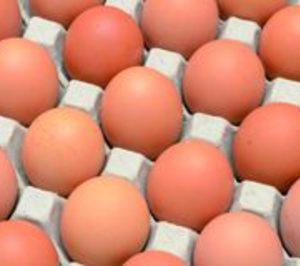 Huevos: Vuelve el equilibrio