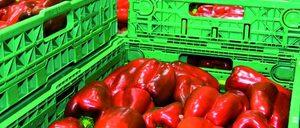 Informe 2014 del mercado de transporte hortofrutícola