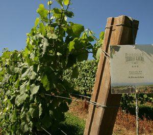 Terras Gauda impulsa un proyecto de viticultura de 6 M€