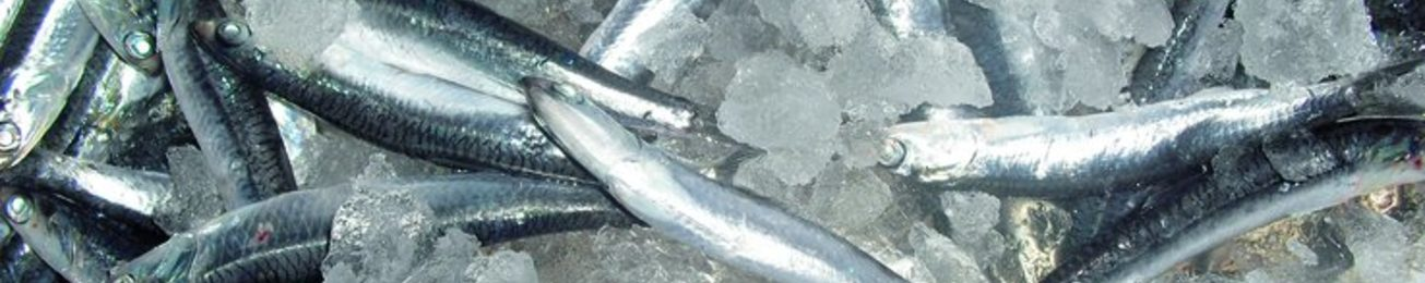 Informe 2014 de proveedores de pescado fresco