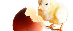 Informe 2015 del sector avícola
