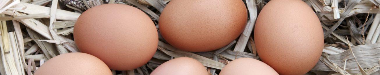 Informe 2015 del sector de Huevos