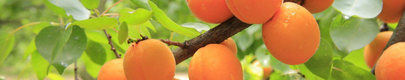 Análisis 2016 de la exportación de la fruta de hueso