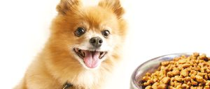 Informe 2016 del sector de petfood