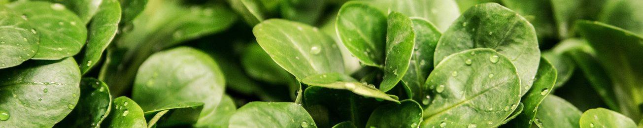 Informe 2016 del sector de IV gama y otros refrigerados hortofrutícolas