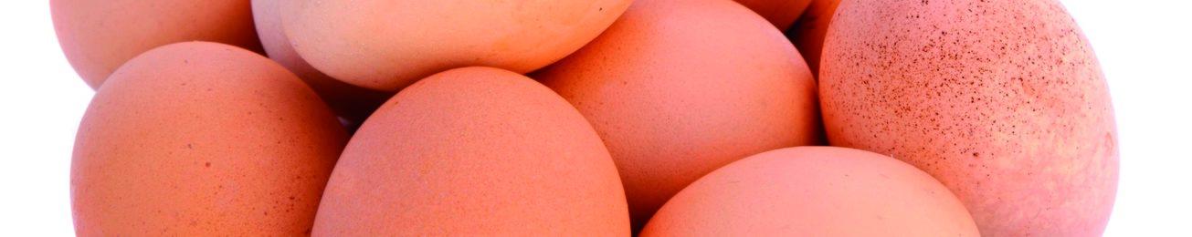Informe 2016 del sector de huevos