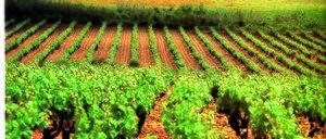 Informe 2016 del mercado de Vinos Espumosos