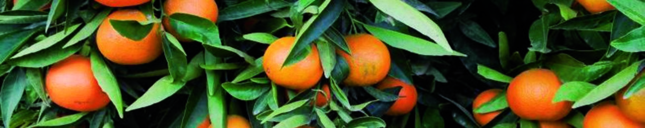 Informe 2016 del e-commerce en el sector hortofrutícola