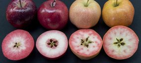 Ifored pone en marcha la producción de manzanas de pulpa roja con tres variedades