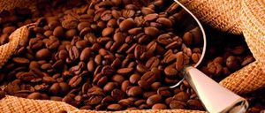 Informe 2016 del sector de café