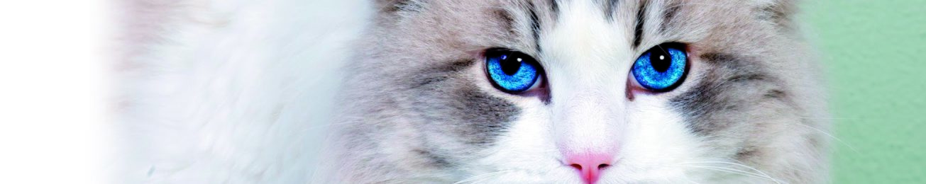 Informe 2017 del sector de petfood