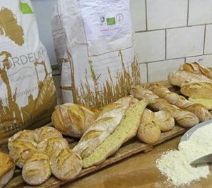 Agrasys internacionaliza su cereal ecológico Tritordeum