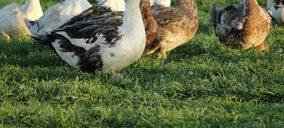 ¿Cómo afectará el brote de influenza aviar al mercado nacional de foie gras?