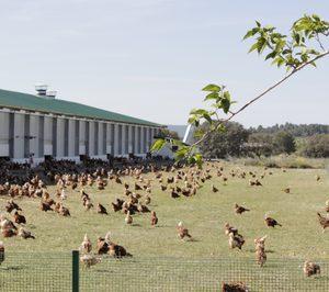 Huevos Guillén, ambiciosa inversión en sistemas de producción alternativos