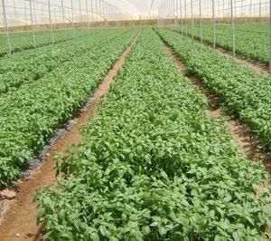 Herbex mantiene el doble dígito en su crecimiento