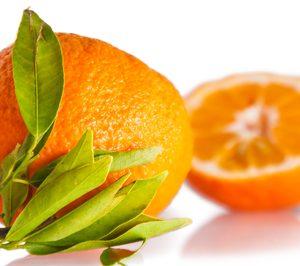Frutas Beri suma 10 M de inversión hasta 2017