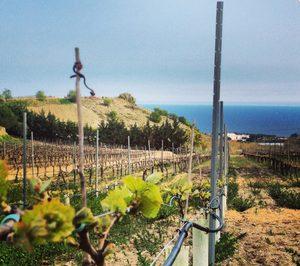 Alta Alella reorganiza su negocio de vinos y cavas tras la venta de Privat