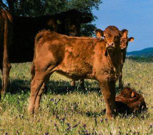 Coren se queda con los activos de Artesanos Gallegos de la Carne