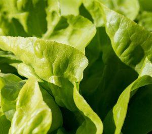 Bargosa ultima su entrada en el mercado de hoja verde