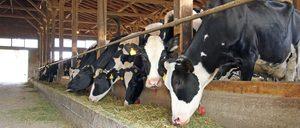 Informe 2017 sobre el sector lácteo