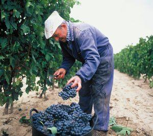 El Ministerio limita las nuevas plantaciones en la DO Cava a 172 ha
