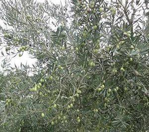 Mercadona altera el mapa comercial de aceite de oliva