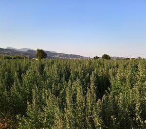 Un nuevo operador procesará quinoa en España