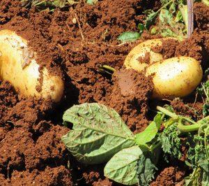 Patatas Naturales Seleccionadas solicita concurso voluntario