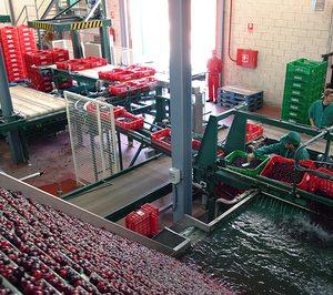 AC ValleJerte amplía sus instalaciones antes de iniciar la campaña de cereza