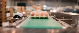 Informe 2018 del sector de huevos