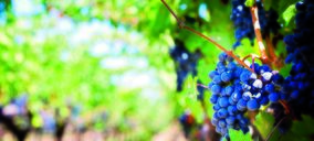Wetwine, un proyecto para valorizar los residuos del vino