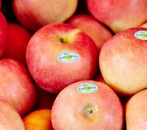 Fructícola Empordà se inicia en el cultivo de manzana ecológica