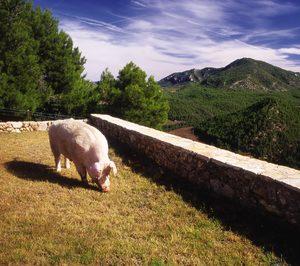 Agropienso prepara importantes inversiones en Huesca