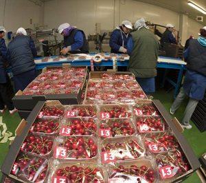 'Cerima Cherries' triplicará su capacidad productiva en 2019