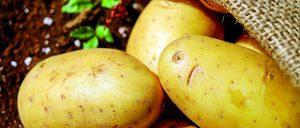 Informe 2018 sobre el sector de patata