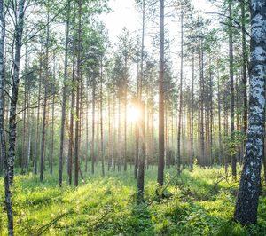 Metsä Board recibe la calificación EcoVadis Gold por su gestión de sostenibilidad