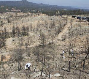 Eurofred compensará sus emisiones de CO2 con repoblaciones forestales
