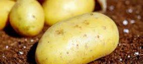 La patata española pierde cuota frente a la extranjera