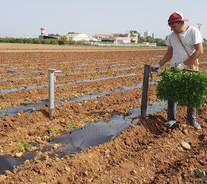 Benihort comienza a producir hortalizas para la industria