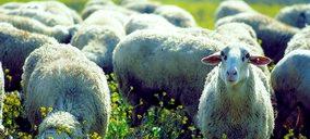 Surge un nuevo operador en el sector de carne de cordero