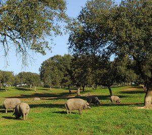 Sierra del Silencio Jabugo acomete una ambiciosa inversión