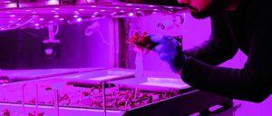 El sector hortofrutícola mejora su competitividad a golpe de innovación