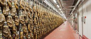 Informe 2018 del sector de cerdo ibérico en España