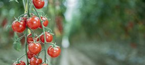 El secreto del tomate de SanLucar Fruit está en Túnez