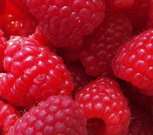 Agromolinillo completa su gama con la fresa Calinda y la frambuesa Adelita